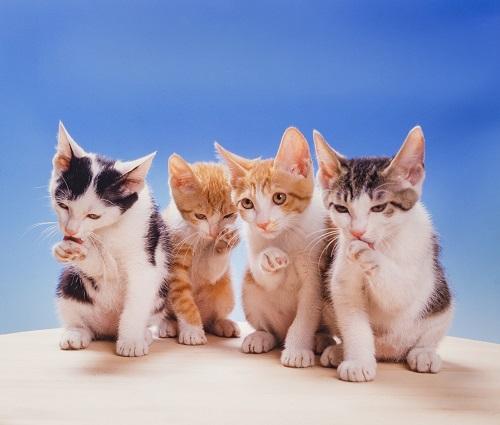 4匹のネコ
