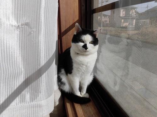 影から見る猫