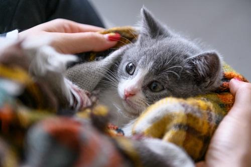 猫を布でくるむ
