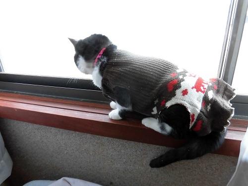 自作した猫エリザベスウェア