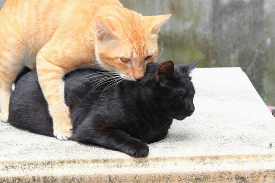 背中をかむ猫
