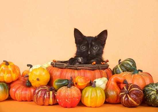 猫とかぼちゃ