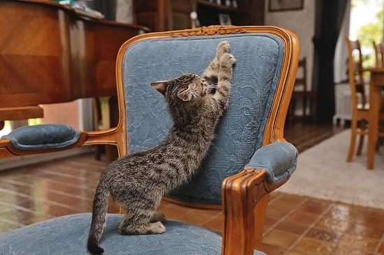 椅子をひっかく猫