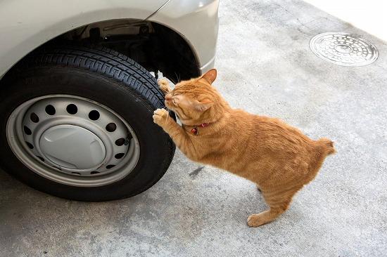タイヤをひっかく猫