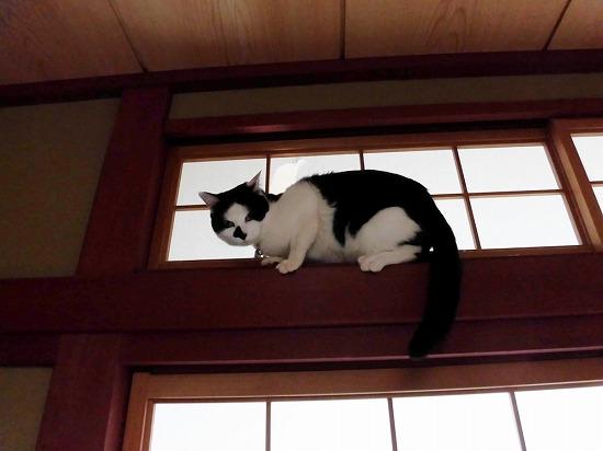 柱に乗る猫
