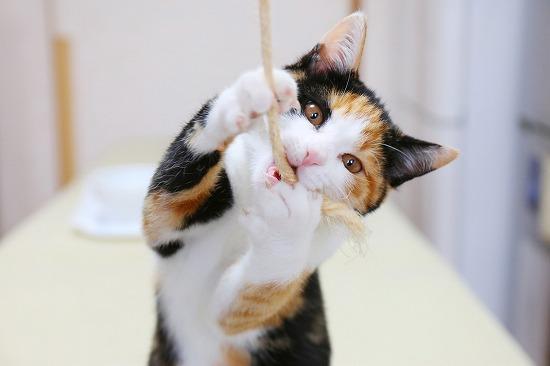 紐をかむ猫