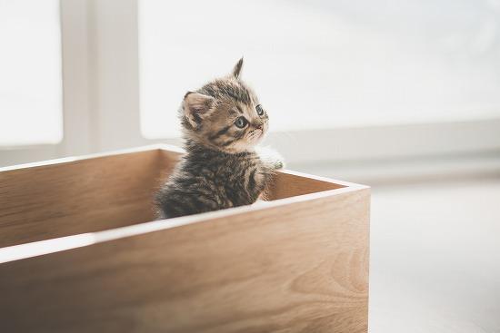 一人暮らしで猫を飼う