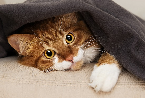室内飼いの猫のために寒さ対策