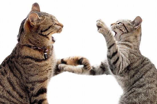 猫の兄弟を迎えるとメリットがこんなにある!飼う時の注意点と準備