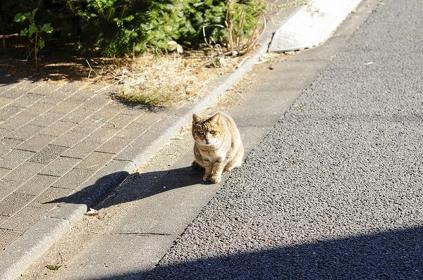 1匹の野良猫