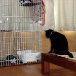 ケージと猫