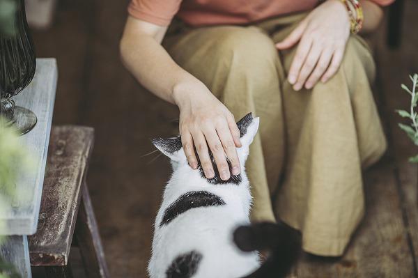 猫の頭をなでる