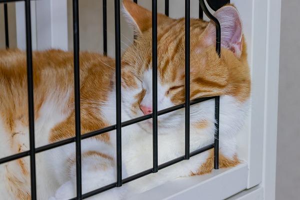ケージで寝る猫